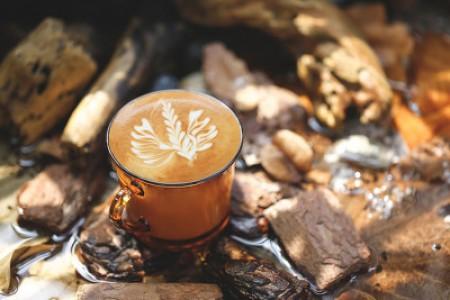 大茶叶 - 有一种像小树枝的茶是什么茶