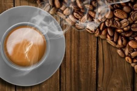 茶叶子 - 茶其实就是树叶子